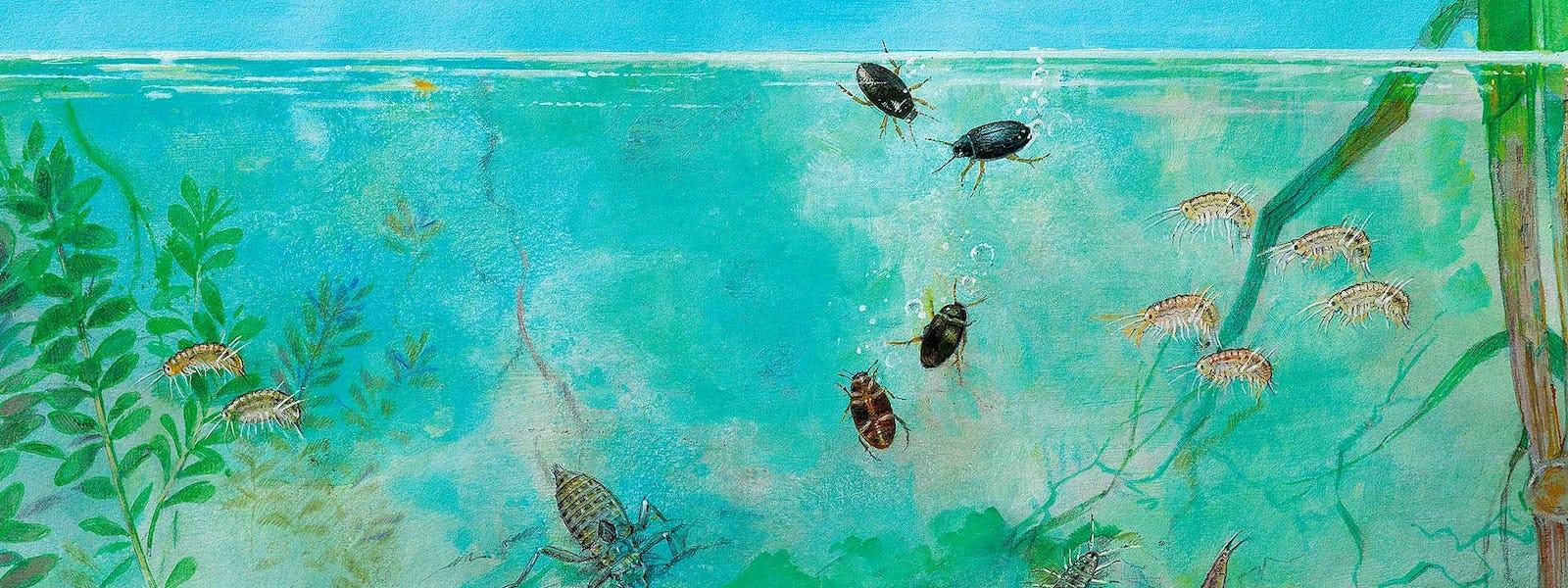Bild - Upplev Vramsån under ytan
