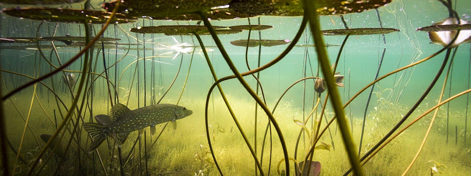 Bild - Leta vattendjur i utställningen Sötvatten
