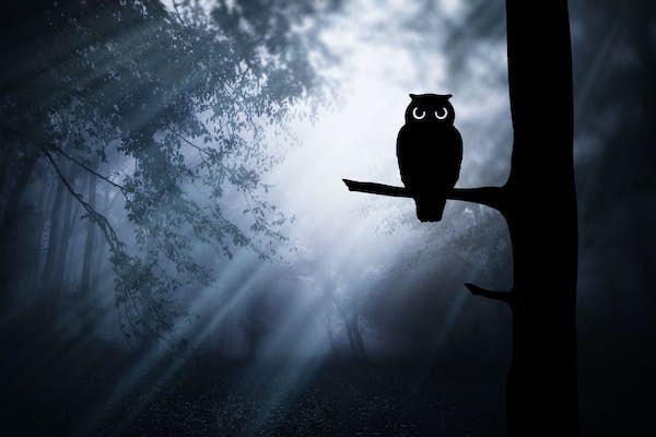 Bild - Ett skri i mörkret