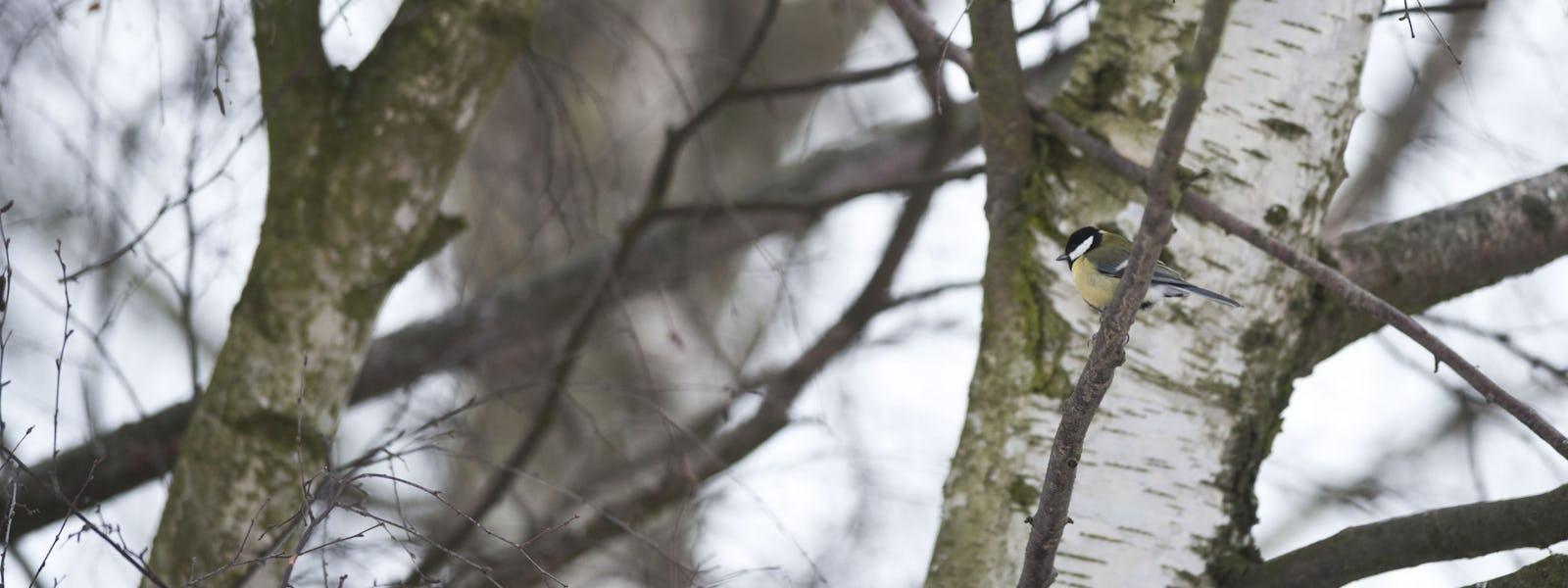 Bild - Fågelquiz med Greger