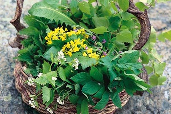 Bild - Vilda växter- workshop i bakning