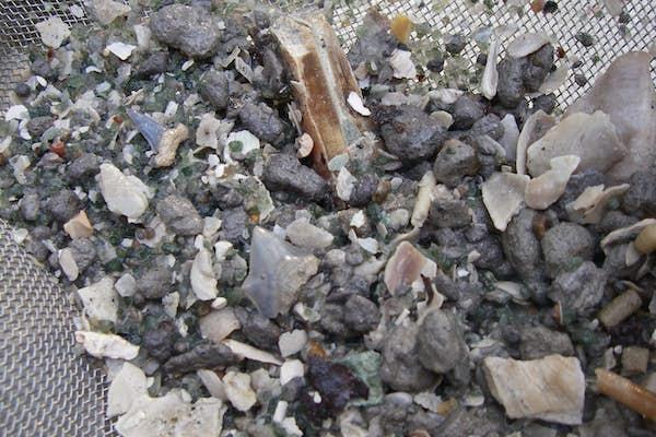 Bild - Vaska fossiler på Ivö