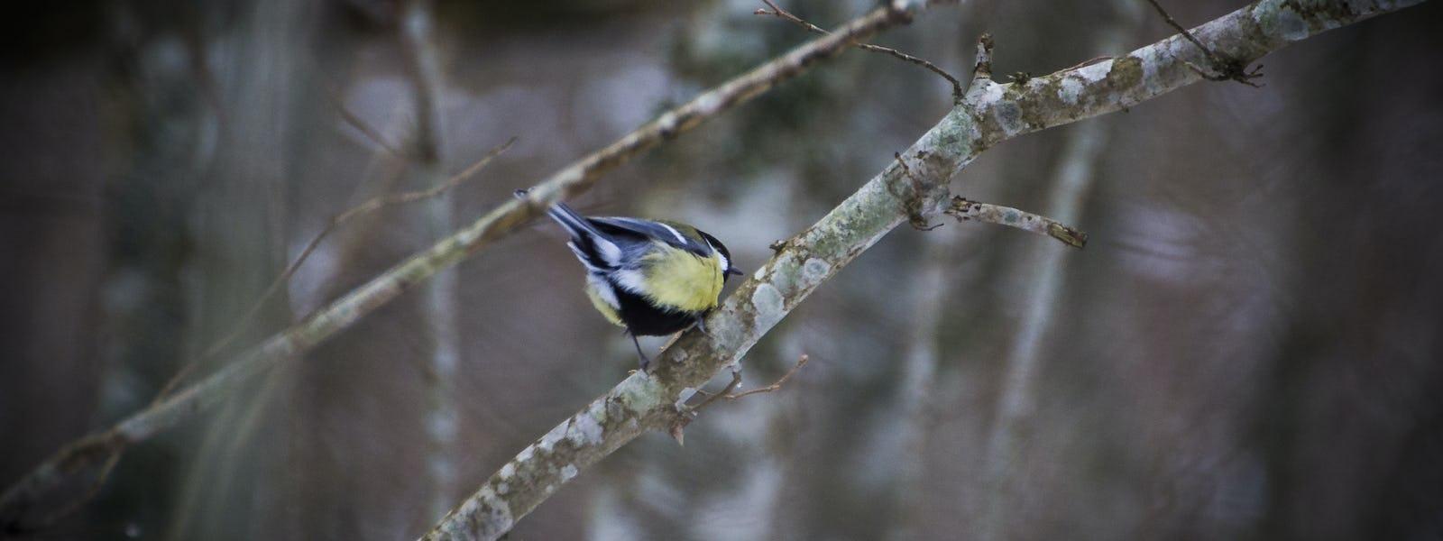 Bild - Vårfåglar på Näsby fält