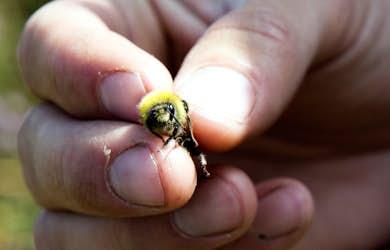 Bild - Insekternas dag