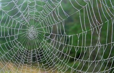 Bild - Spana på spännande spindlar