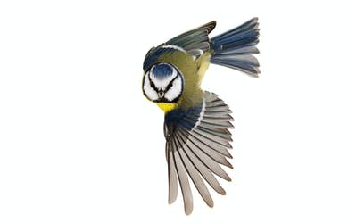 Bild - Nära fåglar