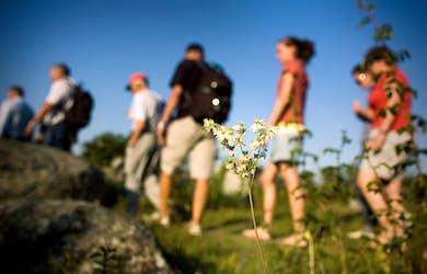 Bild - Floravandring vid Fjällmossen