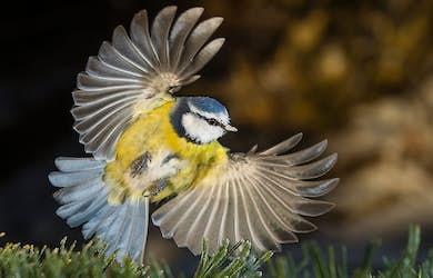 Bild - Vinnare och förlorare i svensk natur