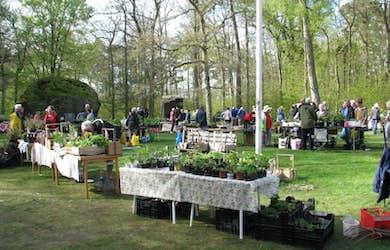 Bild - Växtmarknad på Kjugekull