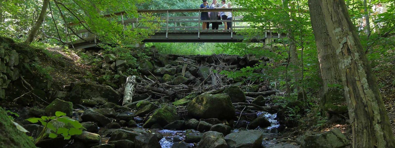 Bild - Skogsbad vid Forsakar