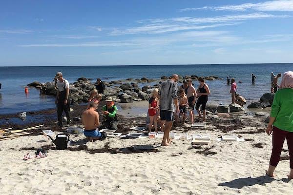 Bild - Håvning vid havet - Snorkla bland sandräkor och sågtång