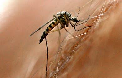 Bild - Sugen på mygg?