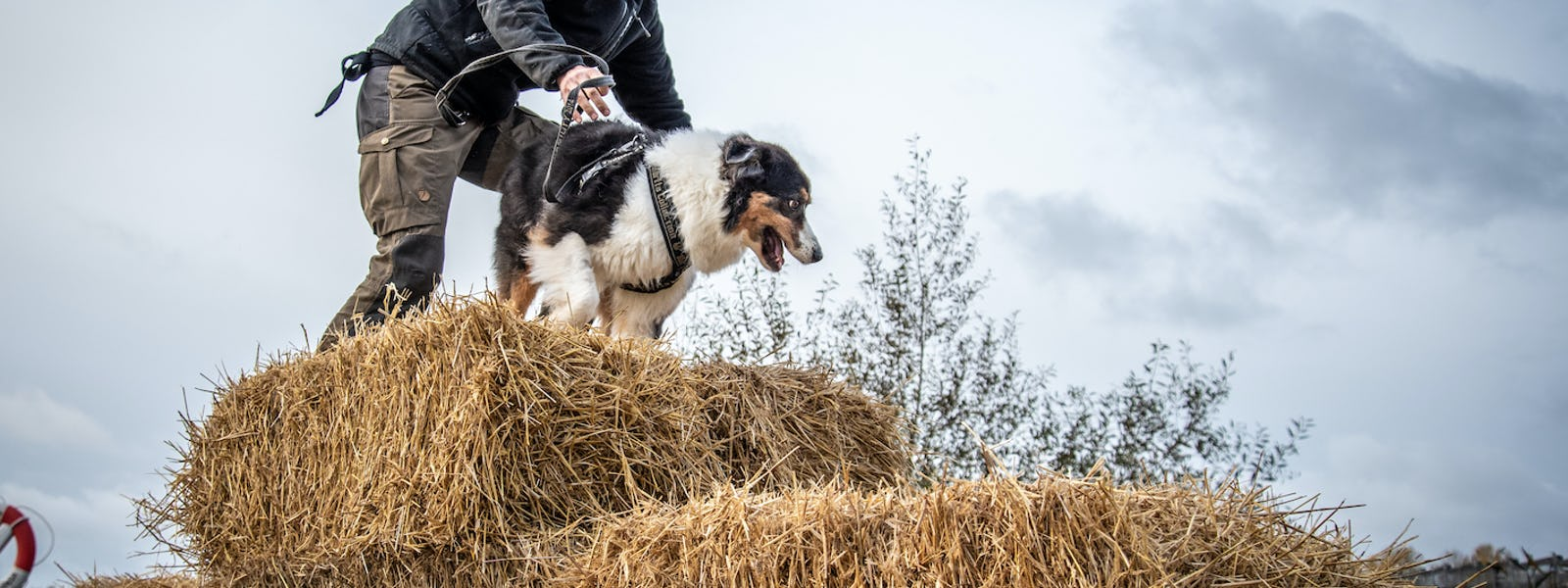 Bild - Bark and run