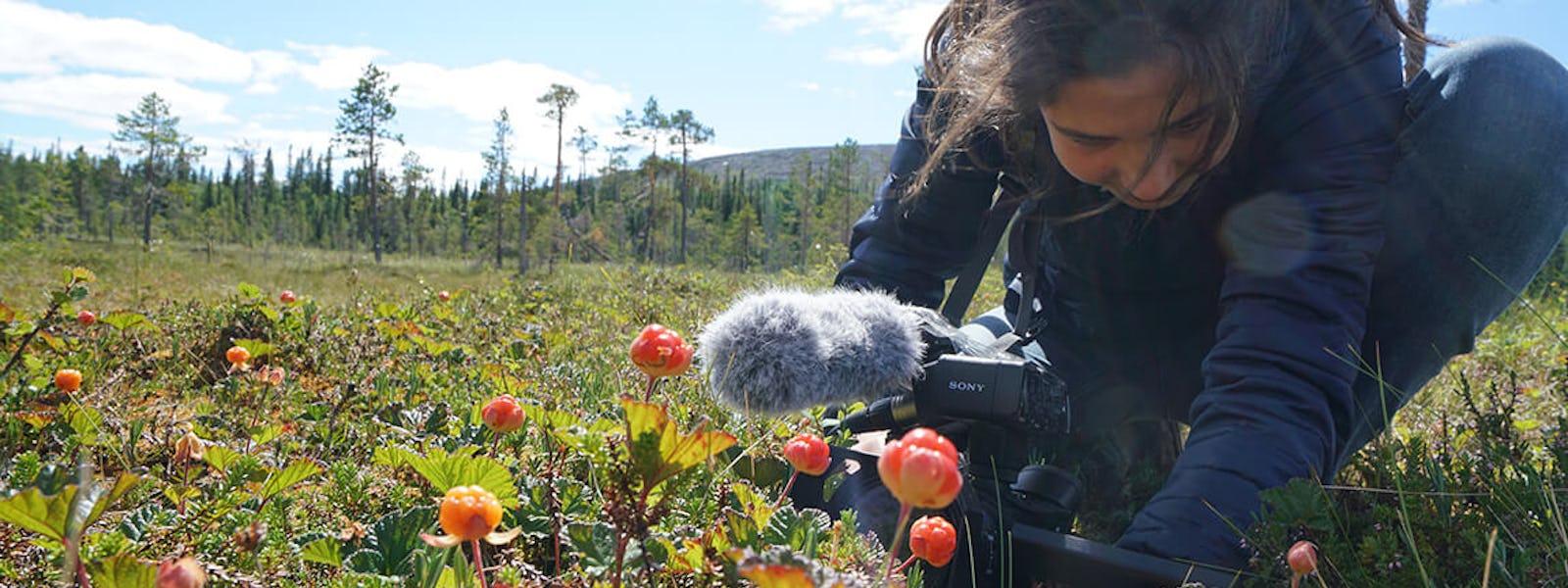 Bild - Tema Naturfilm med Safari Sverige