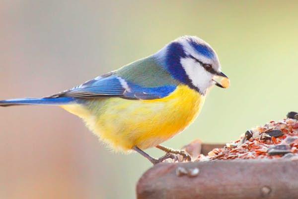 Bild - Vinterfåglar inpå knuten