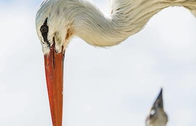 Bild - Storkens återkomst